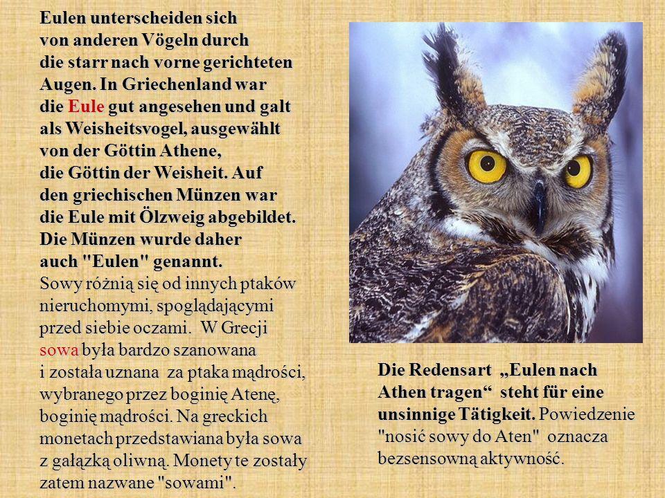 Eulen unterscheiden sich von anderen Vögeln durch die starr nach vorne gerichteten Augen. In Griechenland war die Eule gut angesehen und galt als Weisheitsvogel, ausgewählt von der Göttin Athene, die Göttin der Weisheit. Auf den griechischen Münzen war die Eule mit Ölzweig abgebildet. Die Münzen wurde daher auch Eulen genannt. Sowy różnią się od innych ptaków nieruchomymi, spoglądającymi przed siebie oczami. W Grecji sowa była bardzo szanowana i została uznana za ptaka mądrości, wybranego przez boginię Atenę, boginię mądrości. Na greckich monetach przedstawiana była sowa z gałązką oliwną. Monety te zostały zatem nazwane sowami .
