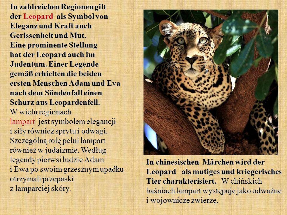 In zahlreichen Regionen gilt der Leopard als Symbol von Eleganz und Kraft auch Gerissenheit und Mut. Eine prominente Stellung hat der Leopard auch im Judentum. Einer Legende gemäß erhielten die beiden ersten Menschen Adam und Eva nach dem Sündenfall einen Schurz aus Leopardenfell. W wielu regionach lampart jest symbolem elegancji i siły również sprytu i odwagi. Szczególną rolę pełni lampart również w judaizmie. Według legendy pierwsi ludzie Adam i Ewa po swoim grzesznym upadku otrzymali przepaski z lamparciej skóry.