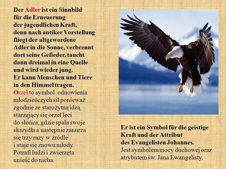 Der Adler ist ein Sinnbild für die Erneuerung der jugendlichen Kraft, denn nach antiker Vorstellung fliegt der altgewordene Adler in die Sonne, verbrennt dort seine Gefieder, taucht dann dreimal in eine Quelle und wird wieder jung. Er kann Menschen und Tiere in den Himmel tragen. Orzeł to symbol odnowienia młodzieńczych sił ponieważ zgodnie ze starożytną ideą starzejący się orzeł leci do słońca, gdzie spala swoje skrzydła a następnie zanurza się trzy razy w źródle i staje się znowu młody. Potrafi ludzi i zwierzęta unieść do nieba.
