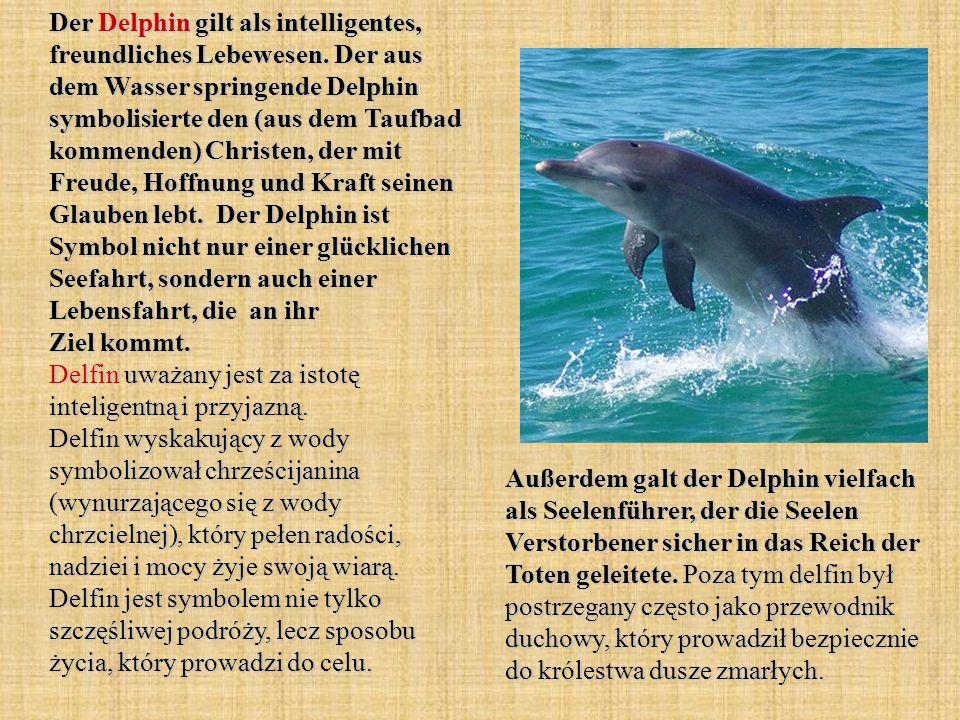 Der Delphin gilt als intelligentes, freundliches Lebewesen