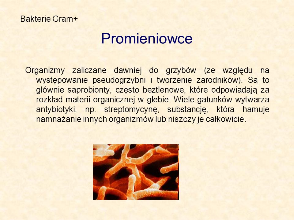 Promieniowce Bakterie Gram+
