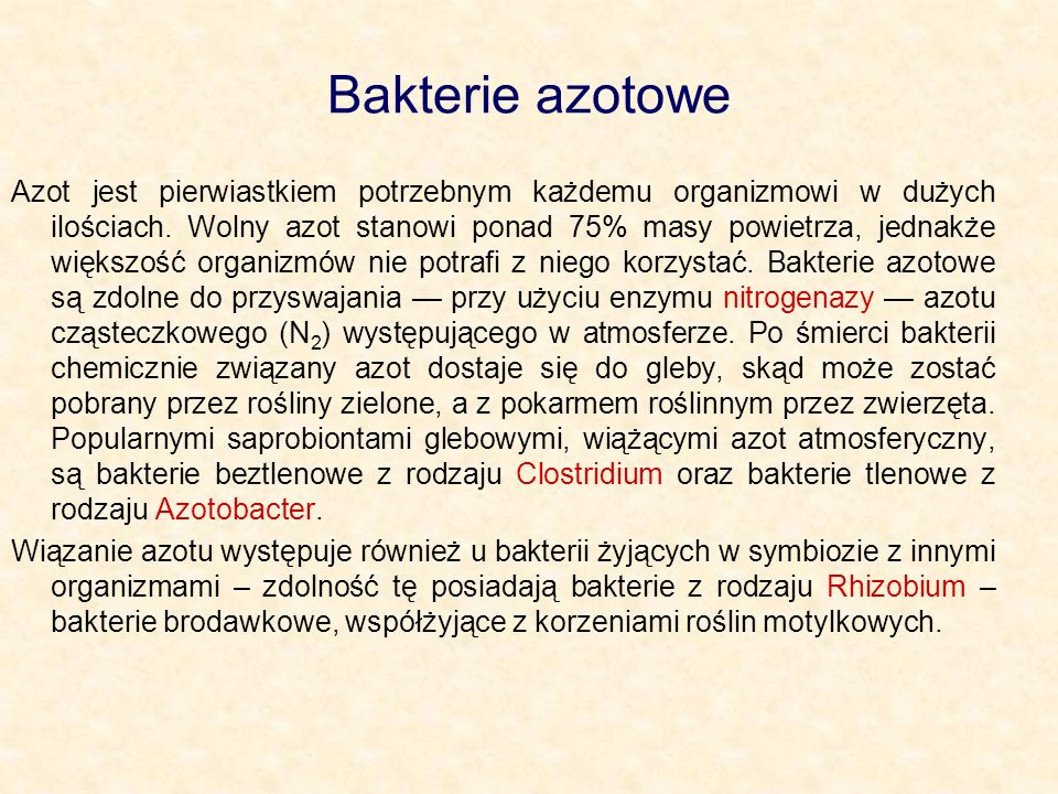 Bakterie azotowe