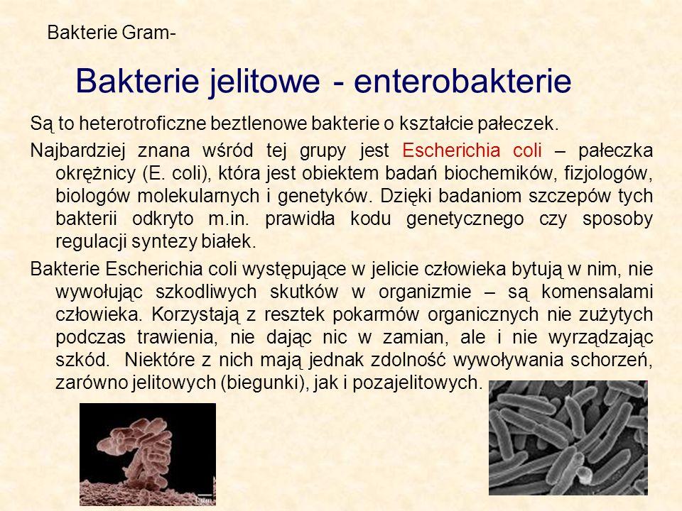 Bakterie jelitowe - enterobakterie