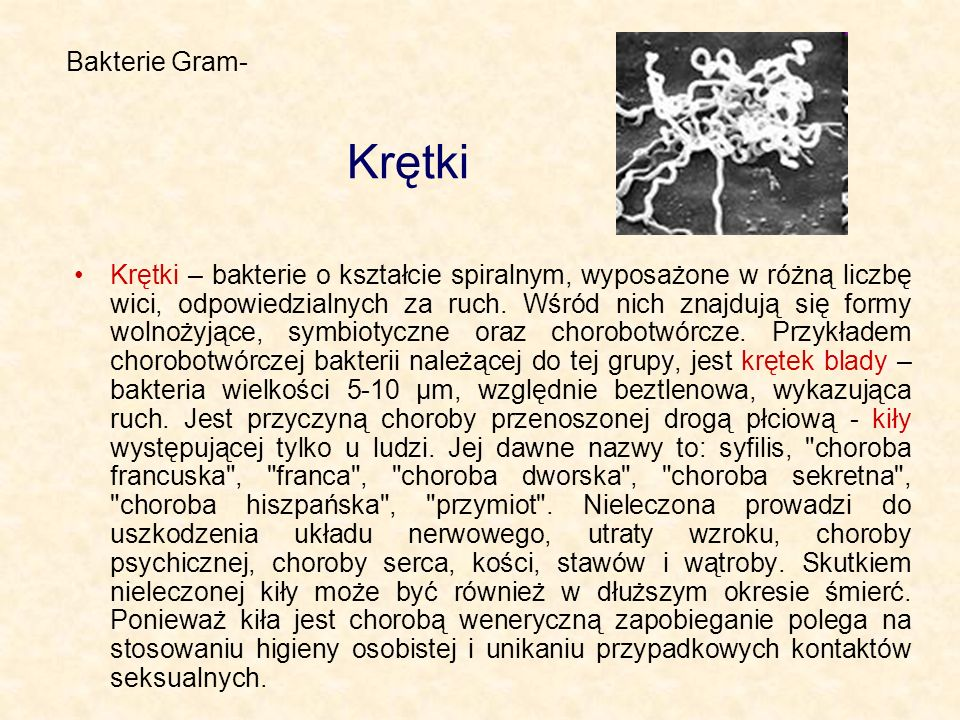 Bakterie Gram- Krętki.