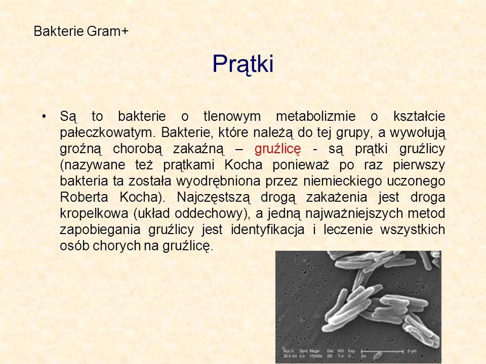 Bakterie Gram+ Prątki.