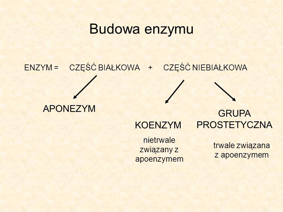 Budowa enzymu APONEZYM GRUPA PROSTETYCZNA KOENZYM