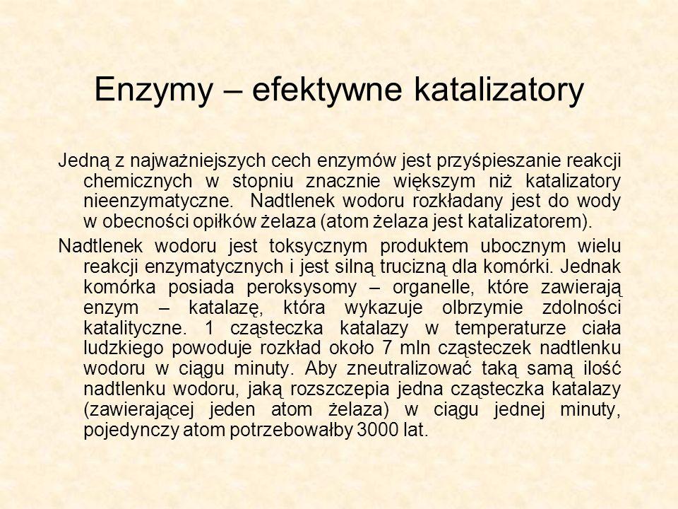Enzymy – efektywne katalizatory