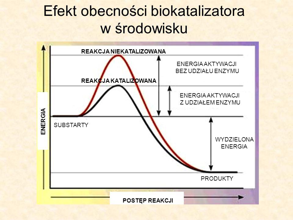 Efekt obecności biokatalizatora