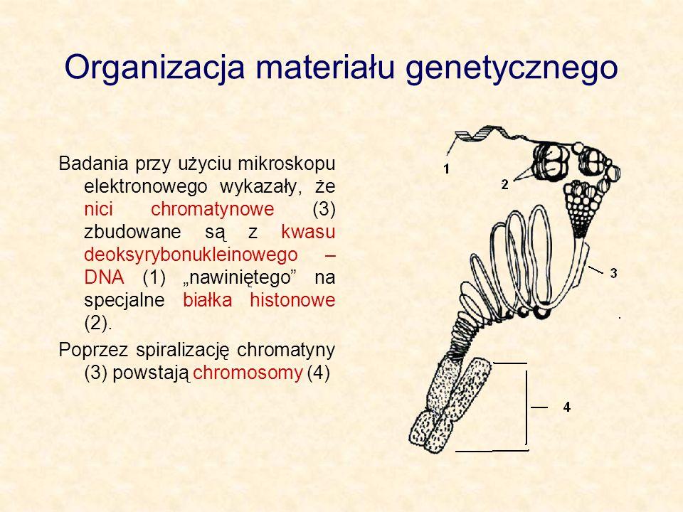 Organizacja materiału genetycznego