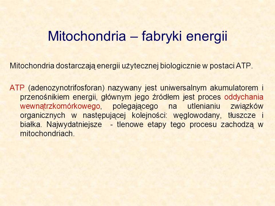 Mitochondria – fabryki energii