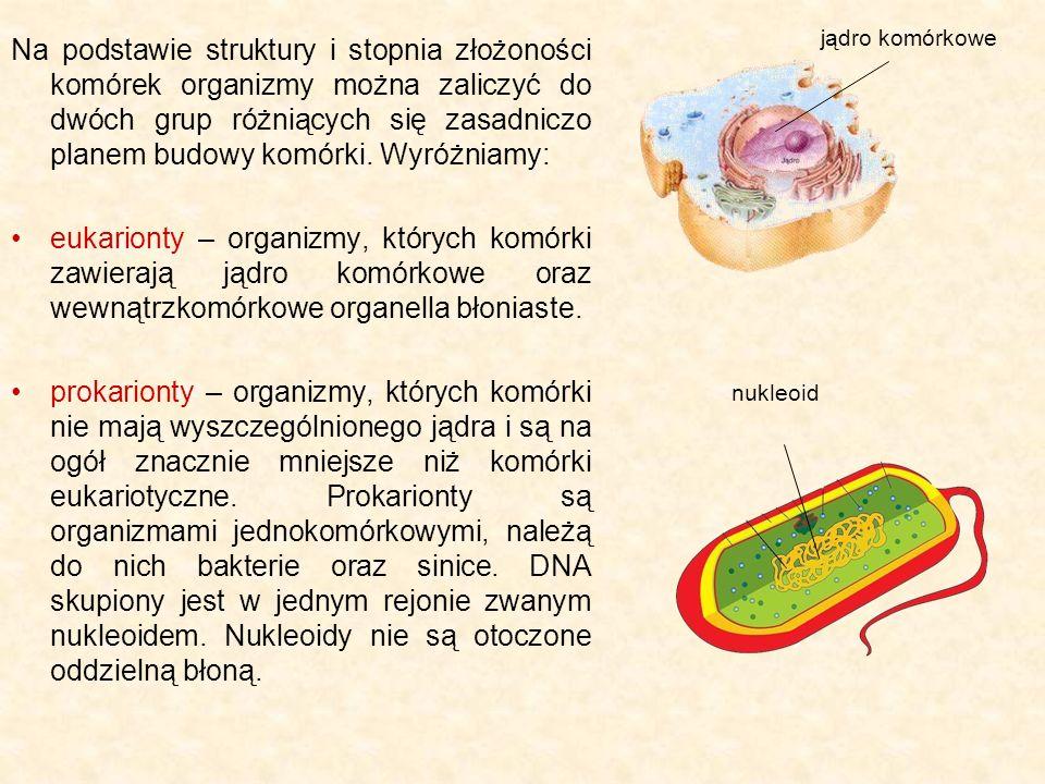 jądro komórkowe