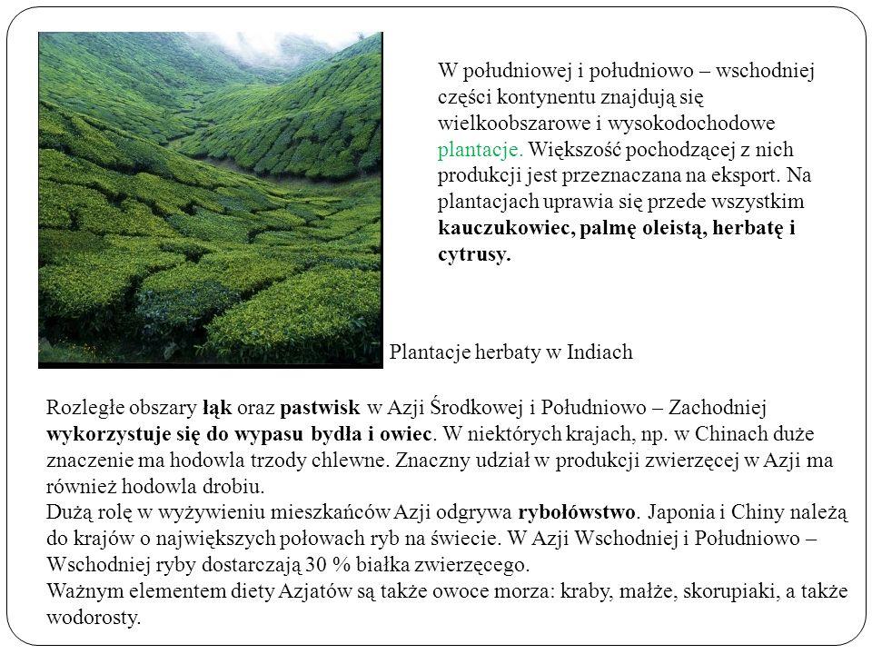 W południowej i południowo – wschodniej części kontynentu znajdują się wielkoobszarowe i wysokodochodowe plantacje. Większość pochodzącej z nich produkcji jest przeznaczana na eksport. Na plantacjach uprawia się przede wszystkim kauczukowiec, palmę oleistą, herbatę i cytrusy.