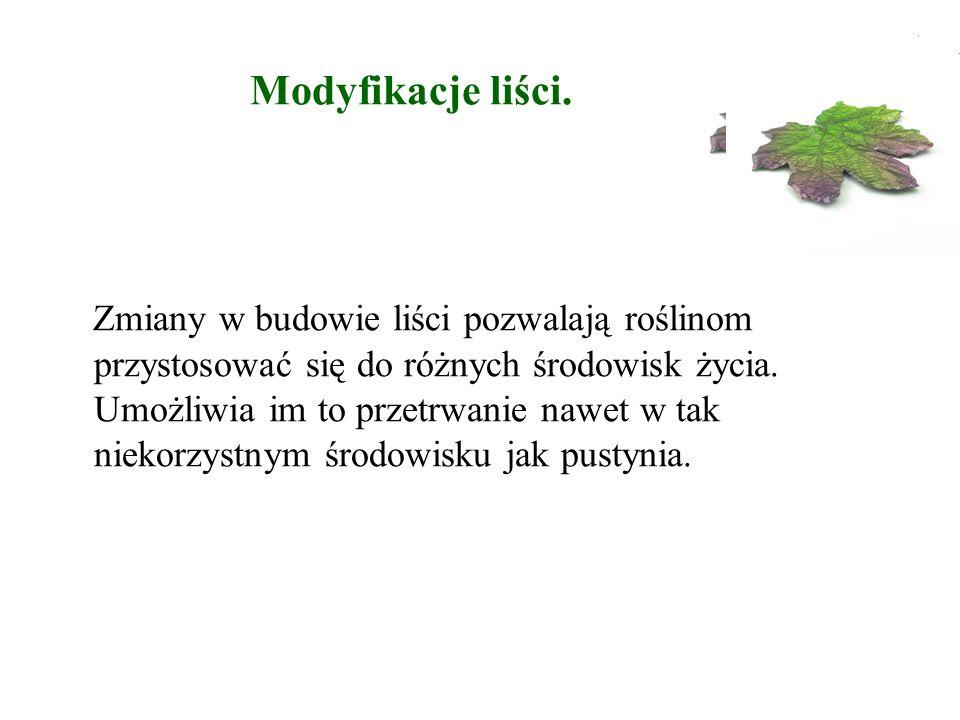 Modyfikacje liści.