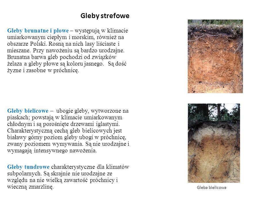 Gleby strefowe