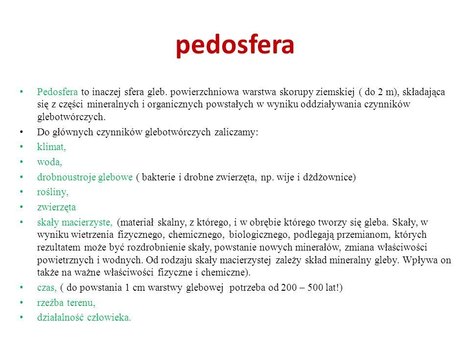 pedosfera