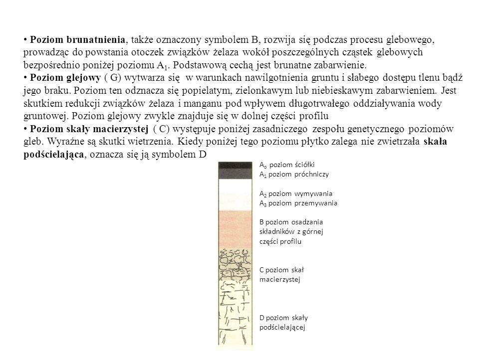 Poziom brunatnienia, także oznaczony symbolem B, rozwija się podczas procesu glebowego, prowadząc do powstania otoczek związków żelaza wokół poszczególnych cząstek glebowych bezpośrednio poniżej poziomu A1. Podstawową cechą jest brunatne zabarwienie.