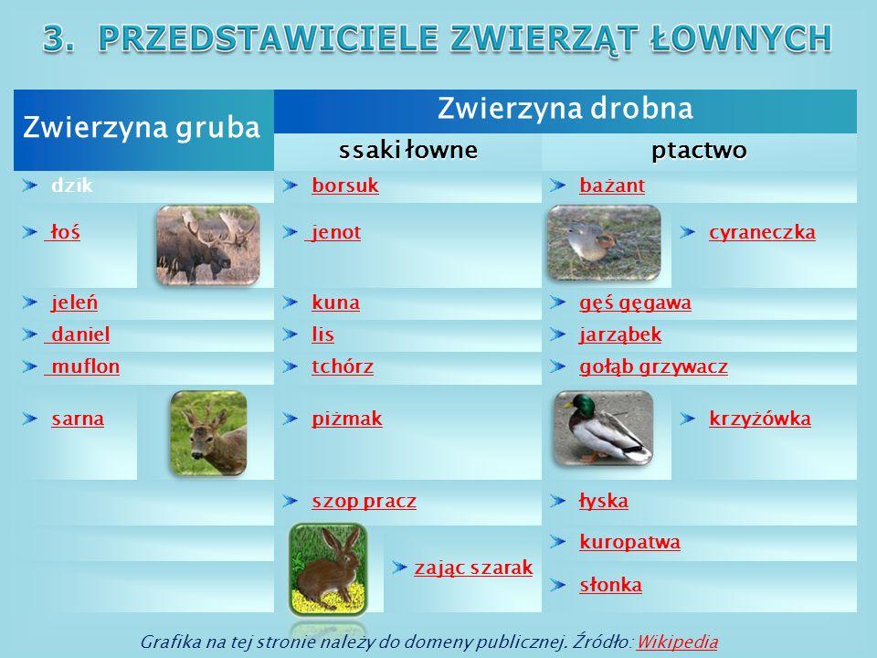 Zwierzyna drobna Zwierzyna gruba ssaki łowne ptactwo dzik borsuk