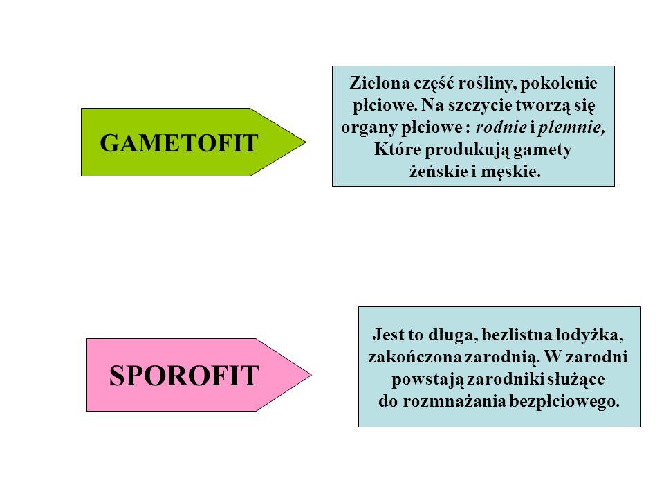 SPOROFIT GAMETOFIT Zielona część rośliny, pokolenie
