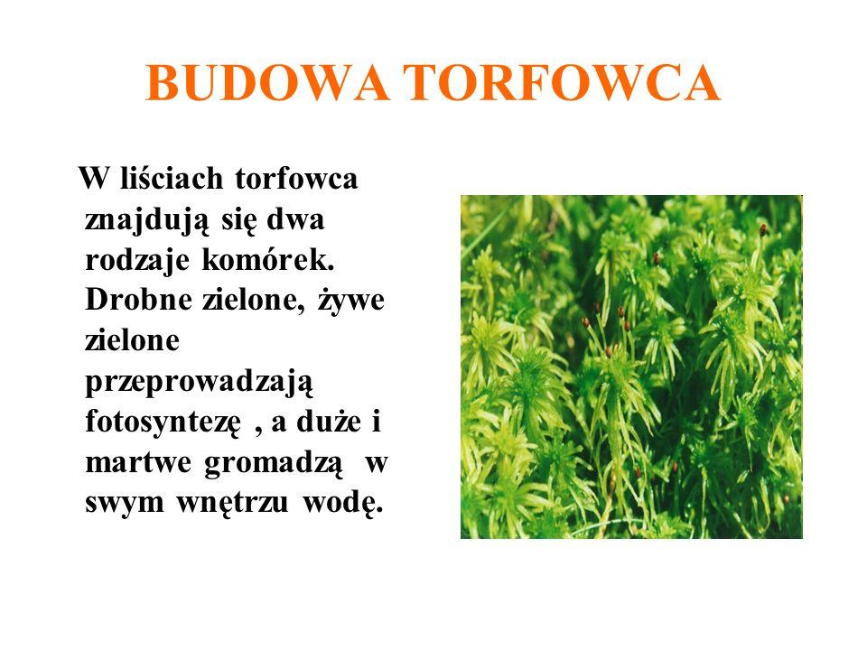 BUDOWA TORFOWCA