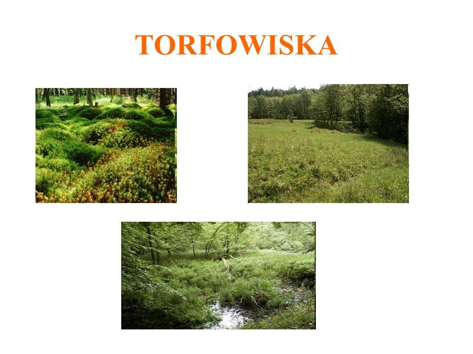 TORFOWISKA