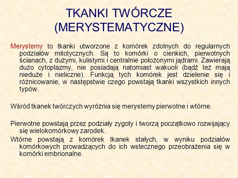 TKANKI TWÓRCZE (MERYSTEMATYCZNE)