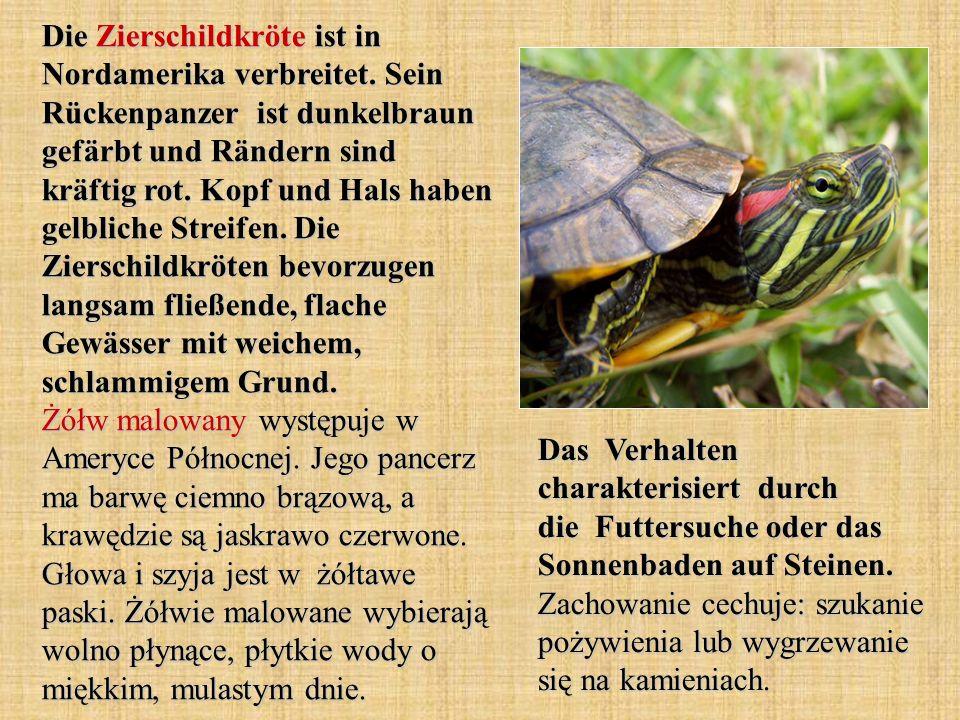 Die Zierschildkröte ist in Nordamerika verbreitet