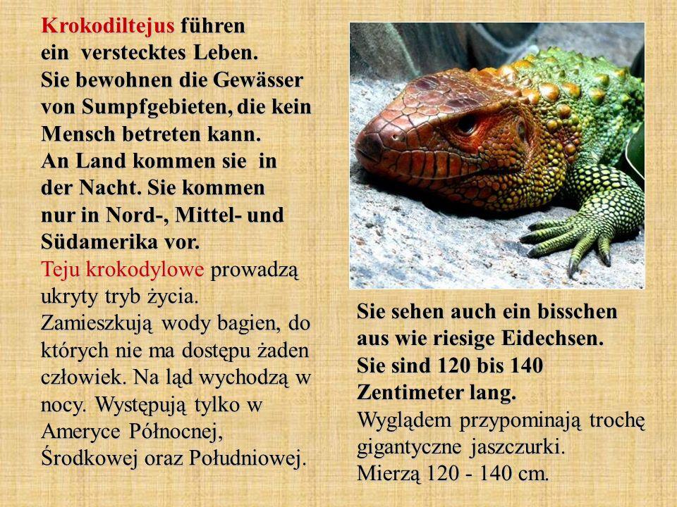 Krokodiltejus führen ein verstecktes Leben