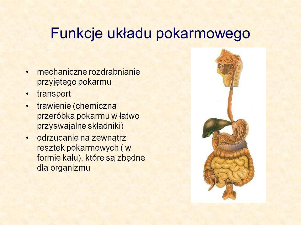 Funkcje układu pokarmowego