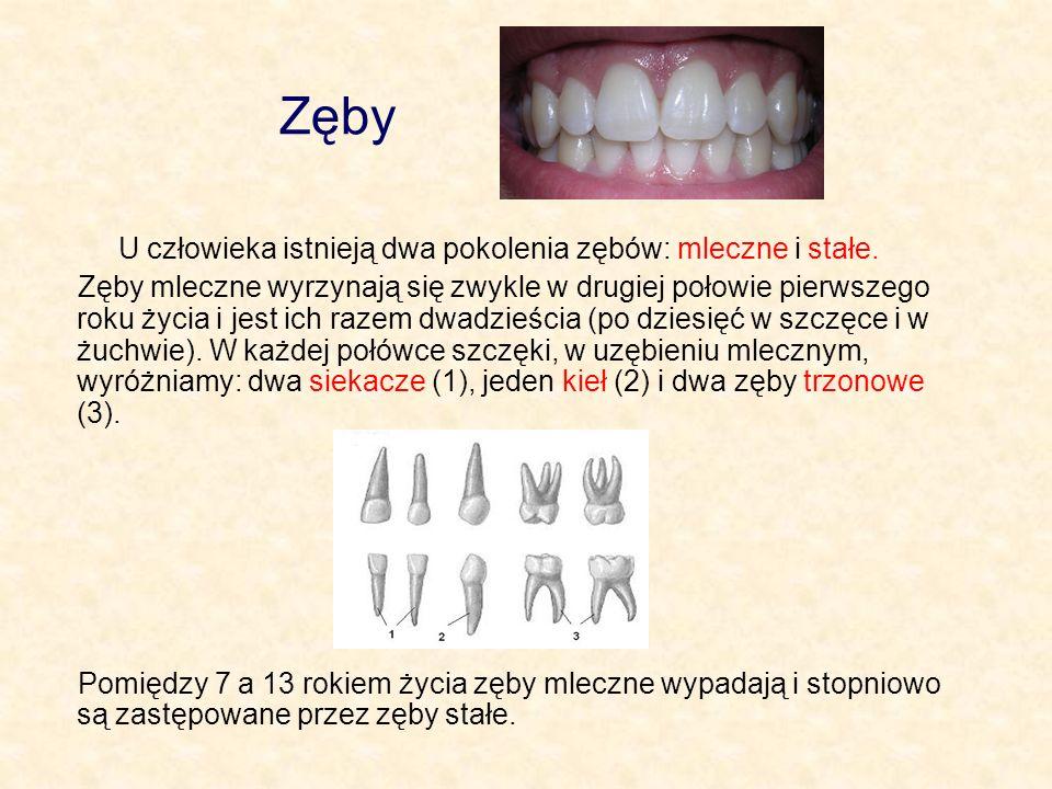 Zęby U człowieka istnieją dwa pokolenia zębów: mleczne i stałe.