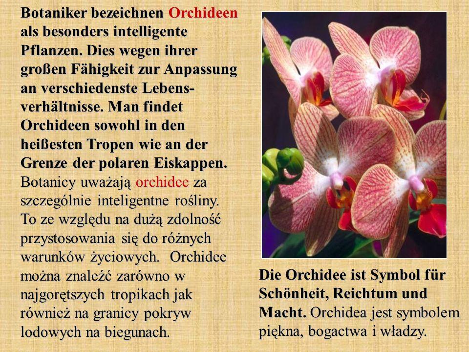 Botaniker bezeichnen Orchideen als besonders intelligente Pflanzen