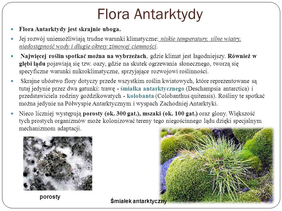Flora Antarktydy Flora Antarktydy jest skrajnie uboga.