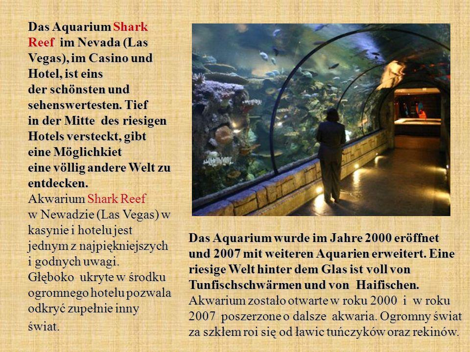 Das Aquarium Shark Reef im Nevada (Las Vegas), im Casino und Hotel, ist eins der schönsten und sehenswertesten. Tief in der Mitte des riesigen Hotels versteckt, gibt eine Möglichkiet eine völlig andere Welt zu entdecken. Akwarium Shark Reef w Newadzie (Las Vegas) w kasynie i hotelu jest jednym z najpiękniejszych i godnych uwagi. Głęboko ukryte w środku ogromnego hotelu pozwala odkryć zupełnie inny świat.