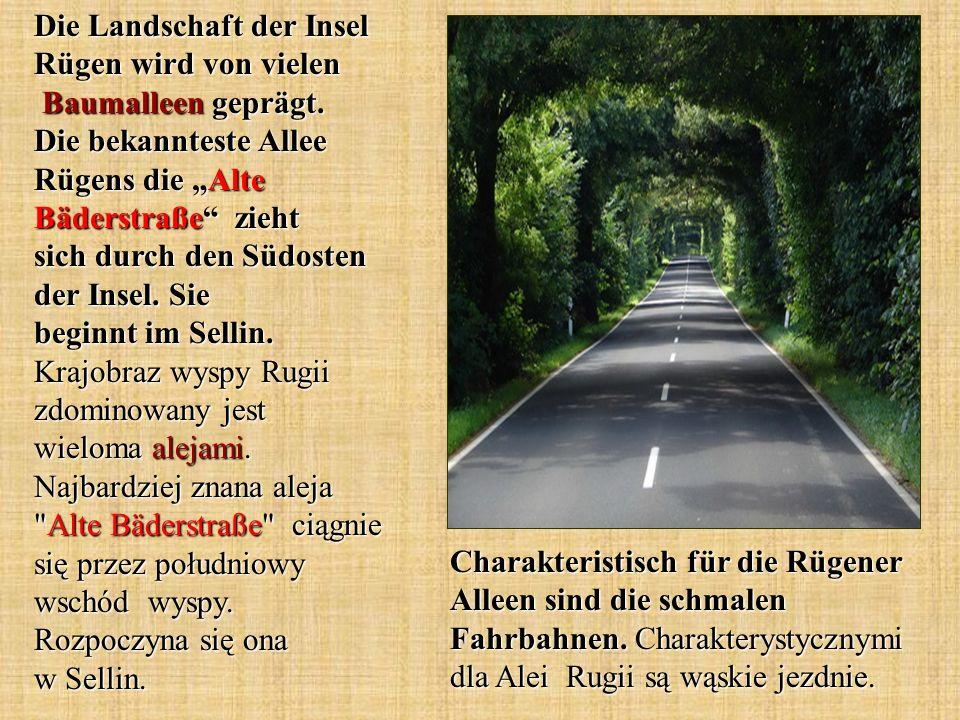 Die Landschaft der Insel Rügen wird von vielen Baumalleen geprägt