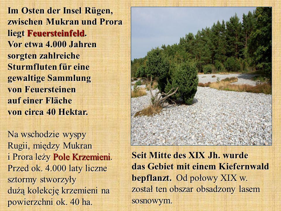 Im Osten der Insel Rügen, zwischen Mukran und Prora liegt Feuersteinfeld. Vor etwa 4.000 Jahren sorgten zahlreiche Sturmfluten für eine gewaltige Sammlung von Feuersteinen auf einer Fläche von circa 40 Hektar. Na wschodzie wyspy Rugii, między Mukran i Prora leży Pole Krzemieni. Przed ok. 4.000 laty liczne sztormy stworzyły dużą kolekcję krzemieni na powierzchni ok. 40 ha.