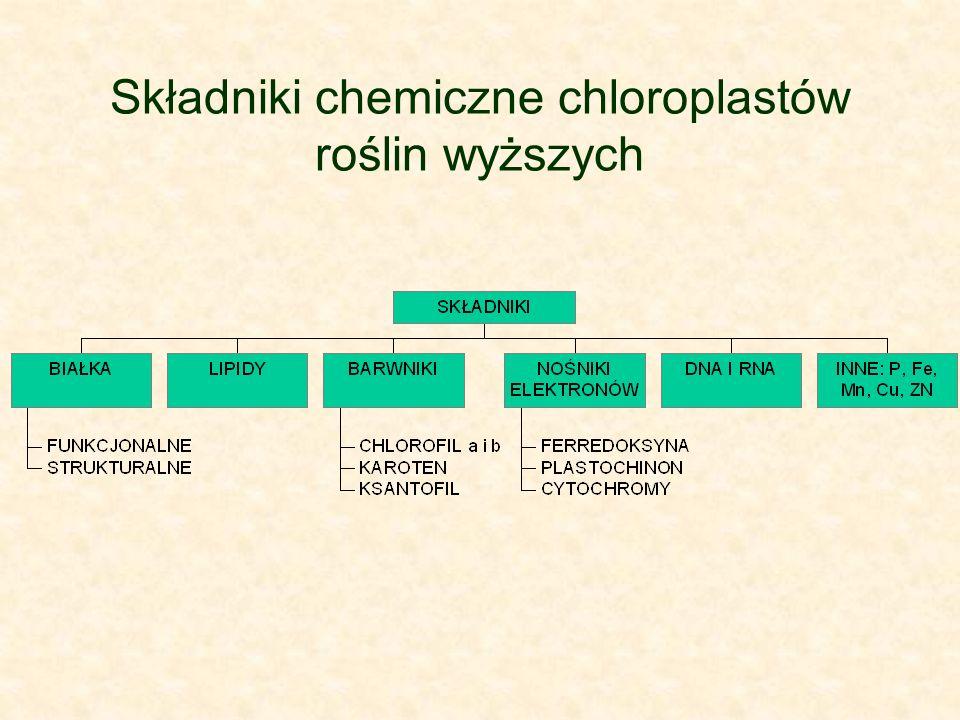 Składniki chemiczne chloroplastów roślin wyższych