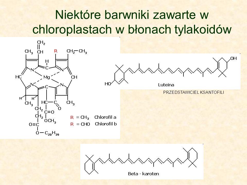 Niektóre barwniki zawarte w chloroplastach w błonach tylakoidów