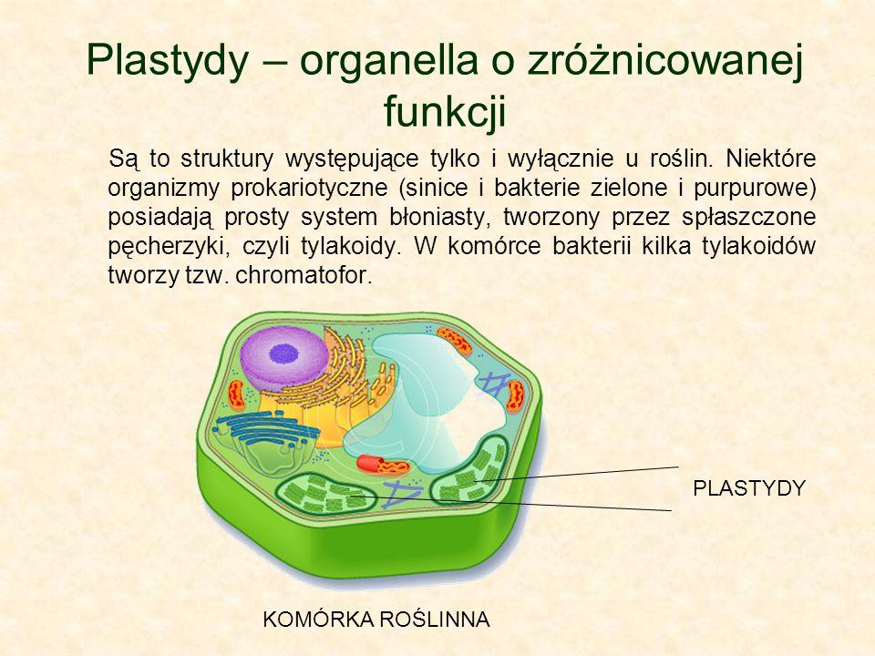 Plastydy – organella o zróżnicowanej funkcji