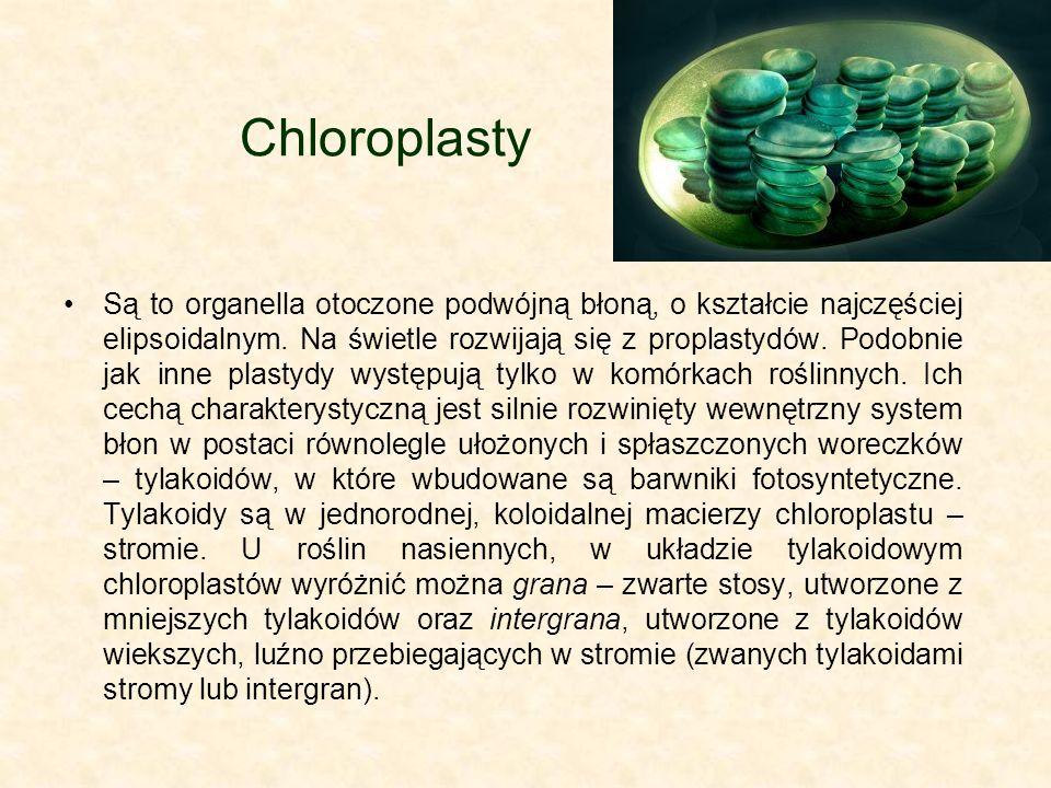 Chloroplasty