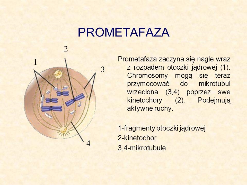 PROMETAFAZA 2.