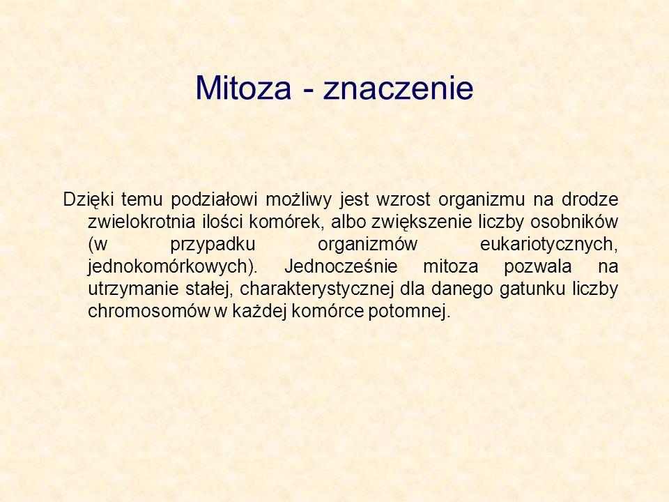 Mitoza - znaczenie