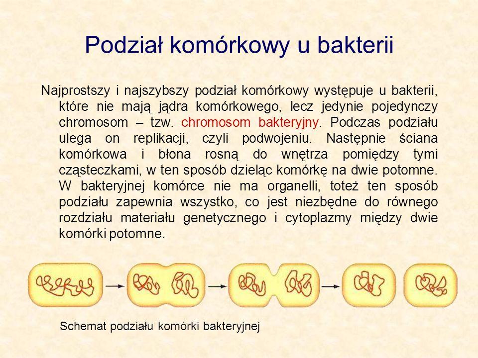 Podział komórkowy u bakterii