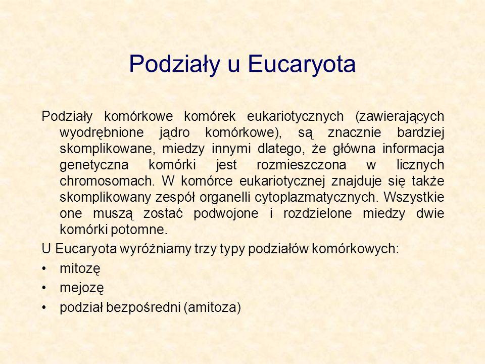 Podziały u Eucaryota