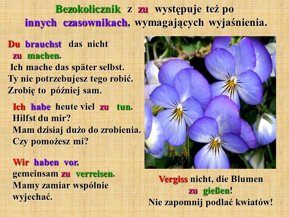 Vergiss nicht, die Blumen zu gießen! Nie zapomnij podlać kwiatów!