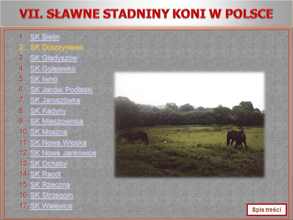 SK Bielin SK Dobrzyniewo SK Gładyszów SK Golejewko SK Iwno