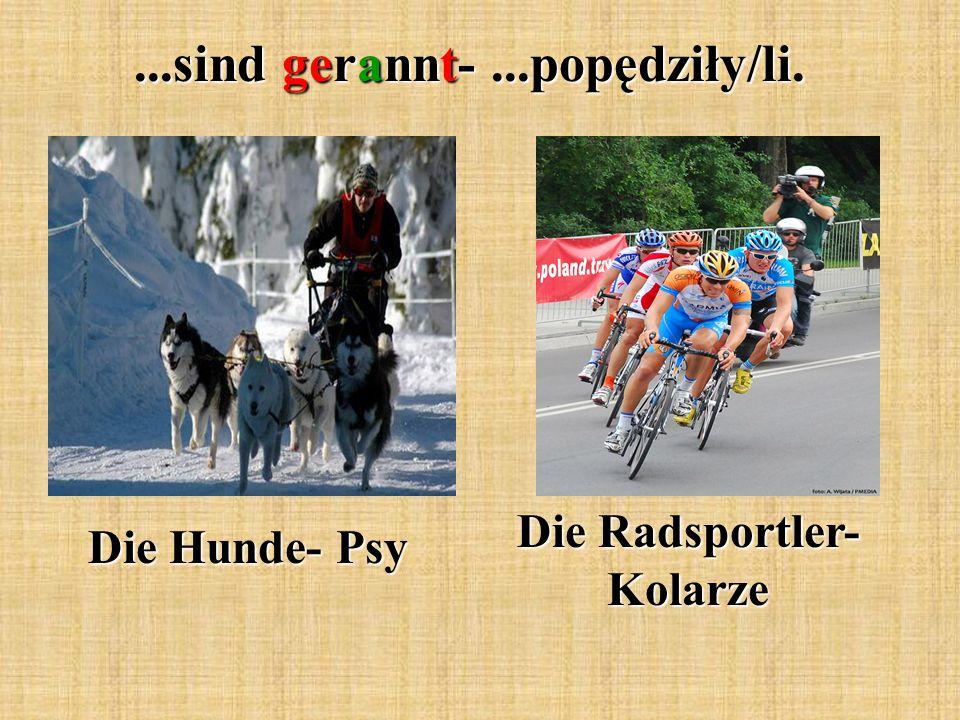 Die Radsportler- Kolarze
