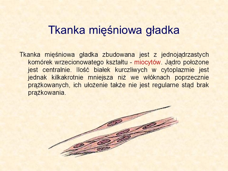 Tkanka mięśniowa gładka
