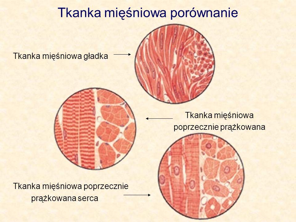 Tkanka mięśniowa porównanie