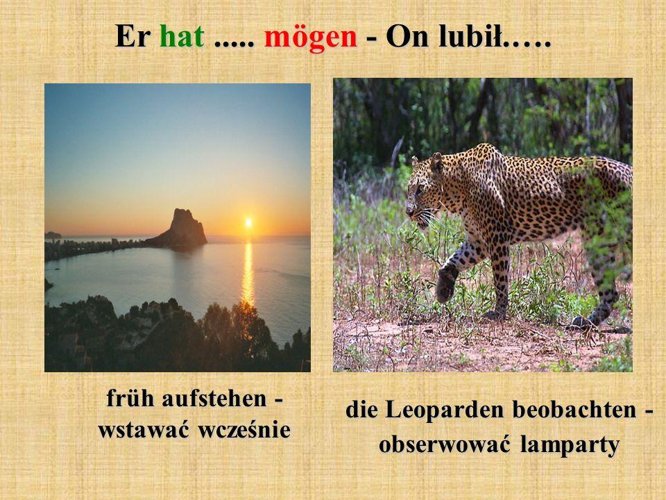 die Leoparden beobachten - obserwować lamparty