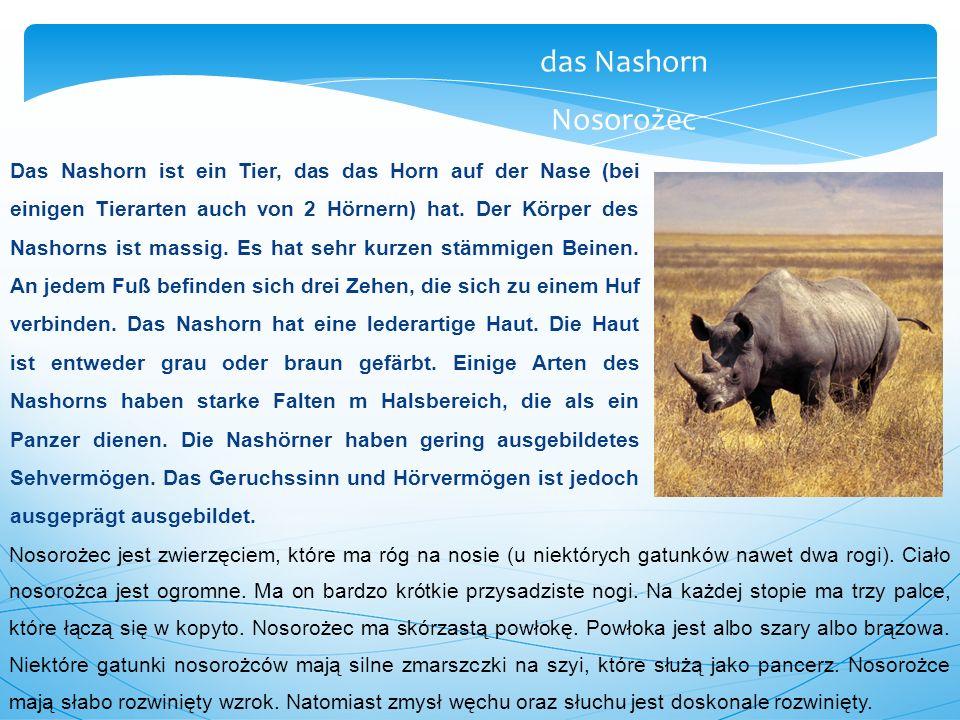 das Nashorn Nosorożec.
