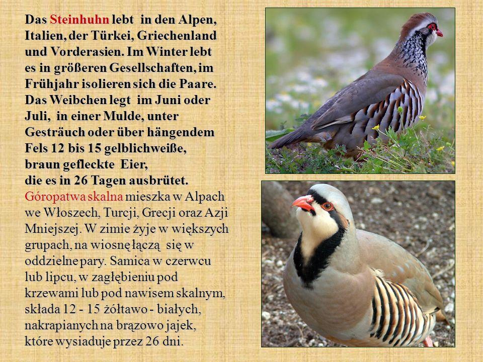Das Steinhuhn lebt in den Alpen, Italien, der Türkei, Griechenland und Vorderasien.